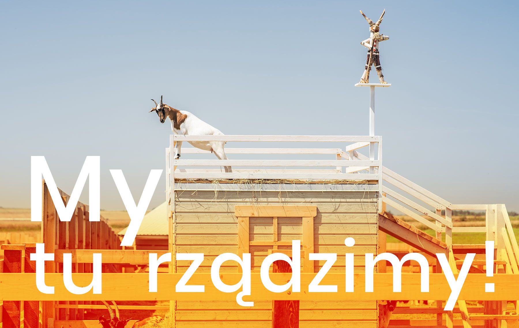 Koziołki mini ZOO DonkeySzot Rogozina